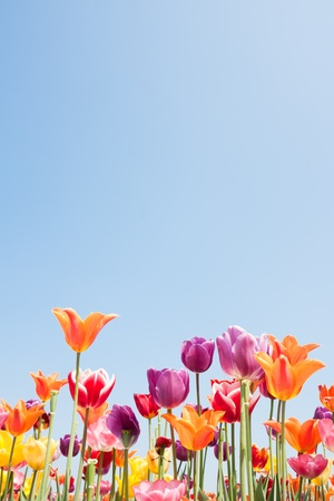 Beautiful coloured flowers with copyspace for text photo