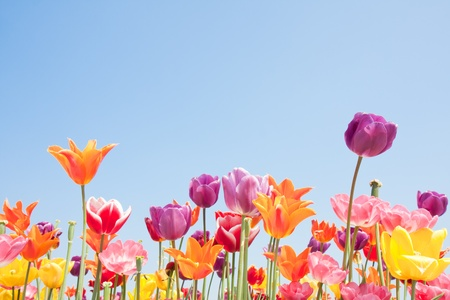 copyspace: Beautiful coloured flowers with copyspace for text Stock Photo