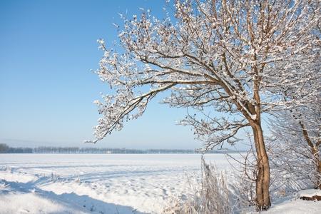 オランダの農地の winterlandscape で雪に覆われた木の表示します。 写真素材