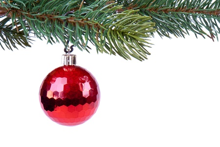 Christmas ball on green spruce branch photo