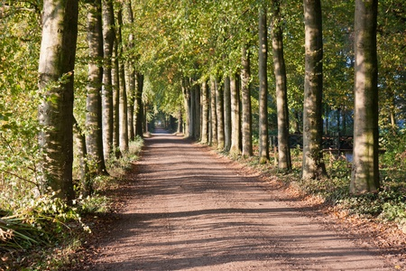Autumn scenery of rural lane with the sunlight shining through the trees