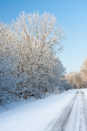 Road through snowy wood in wintertime photo