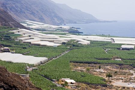 Big banana plantations at La Palma, Canary Islands photo