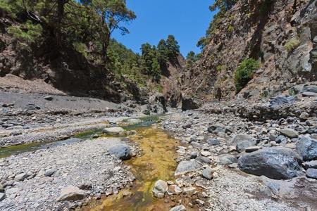 pine creek: Caldera de Taburiente, valley at La Palma, Canary Islands