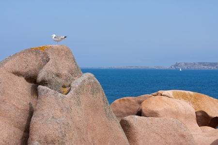 Seagull at a big rock at the French coast of Brittany photo