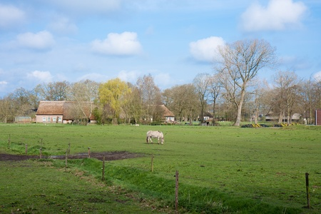 Pasture in the Netherlands with farmhouse and horse photo