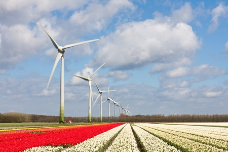 Big Dutch colorful tulip fields with wind turbines Stock Photo - 13349949