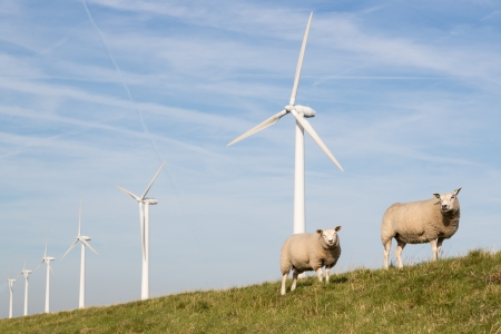 Windmill and sheep in the Netherlands Stock Photo - 14956810