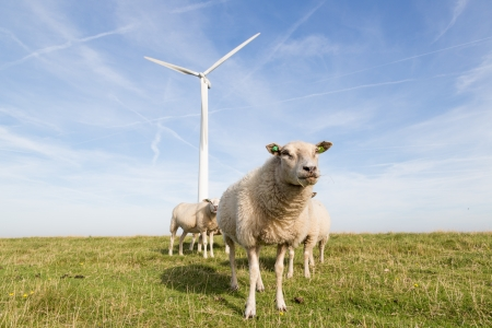 Windmill and sheep in the Netherlands