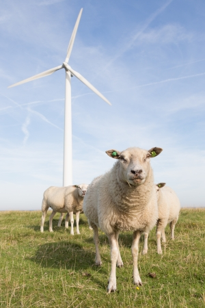 Windmill and sheep in the Netherlands photo