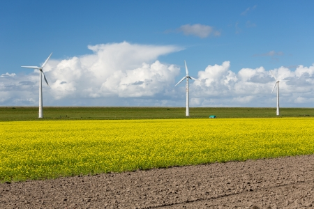 coleseed: Dutch windturbines behind a yellow coleseed field Stock Photo