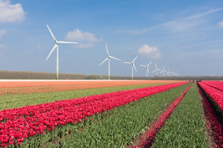 Dutch landscape with tulips and wind turbines Stock Photo - 16126969