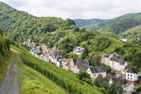 Aerial view of mosel city Trarbach with vineyards photo