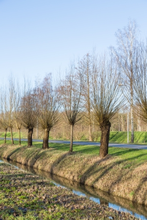 Pollard willows along a ditch and road Stock Photo - 18284122