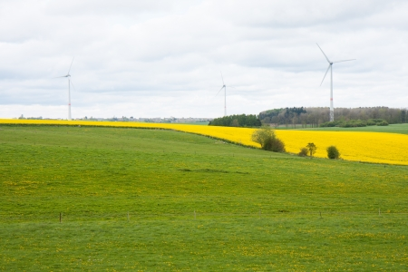 coleseed: Belgium fields with coleseed and wind turbines