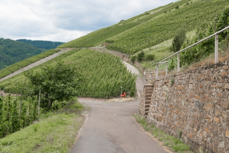 Countryroad through German vineyards along the river Mosselle photo