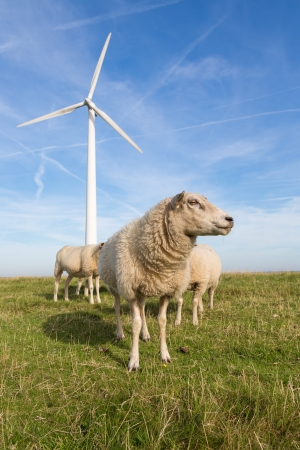 Sheep at a dike along a row of wind turbines photo