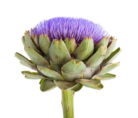 Isolated artichoke at white backgound photo