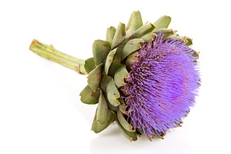 Isolated artichoke at white backgound Imagens