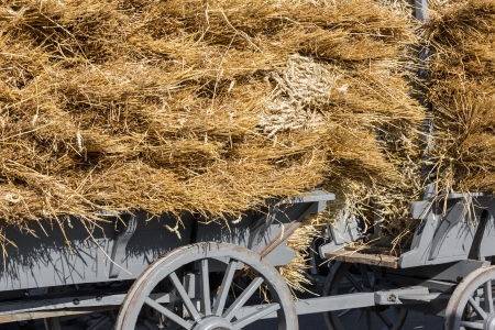 Traditional Dutch wooden hay-wagon loaded with a pile of hay photo