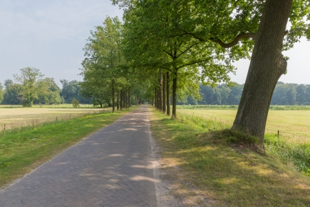 Dutch landscape with paving stone country road and trees photo