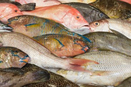 Various fresh fish exposed at a fish market photo