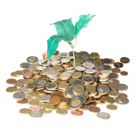 money savings: Pile of coins with money tree isolated over a white background