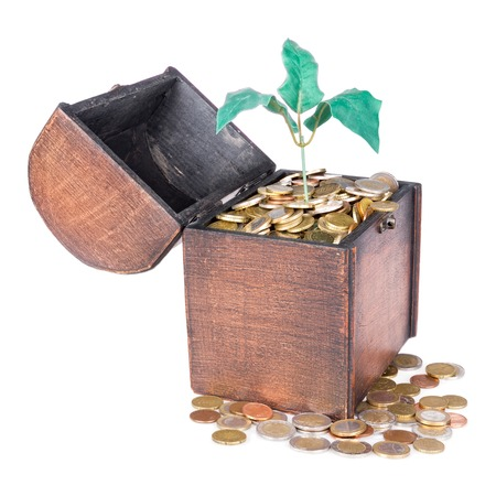 Wooden money chest filled with coins and a money tree, isolated at a white background photo