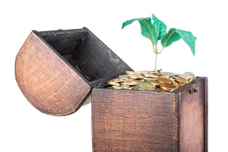 Wooden money chest filled with coins and a money tree, isolated over white photo