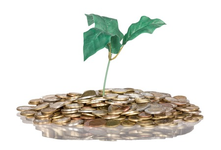 money savings: Pile of coins with money tree isolated at a white background, isolated over white