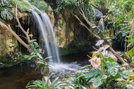 birds scenery: Beautiful waterfall with flamingo flowers in tropical garden Stock Photo