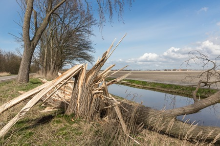 Dutch farmland with blown down tree after a heavy spring storm Stockfoto