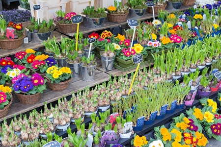 coulorful: UTRECHT, THE NETHERLANDS - MARCH 06: Market stand selling several fresh Dutch flowers on March 06, 2013 downtown in Utrecht, fourth city of the Netherlands