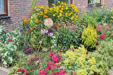 coneflowers: Dutch house has front yard with several blooming plants Stock Photo