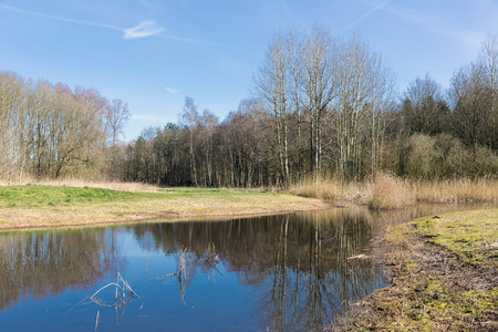 swampy: Dutch woodland with bare trees mirroring in lake in early springtime