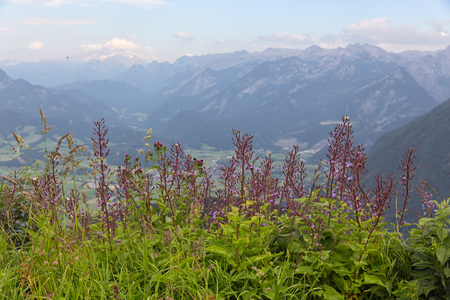 View from Rossfeld panorama road in Germany with purple flower bush