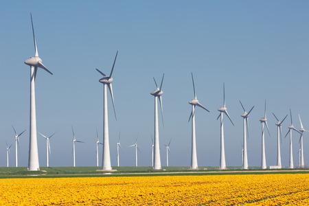 Dutch farmland with yellow tulip field and big wind turbines Stockfoto