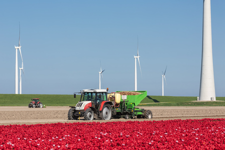 Dutch farmland with tractor planting potatoes between tulip fields and wind turbines Stock Photo