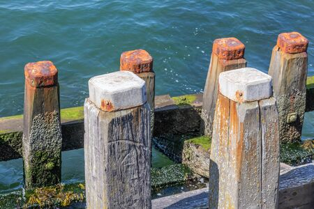 Wooden Jetty with alga of harbor Vlissingen, The Netherlands