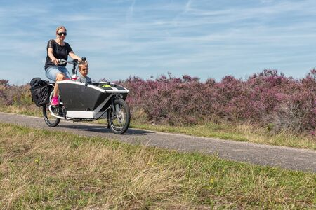 Ermelo, The Netherlands - August 23, 2019: Woman with little boy in carrier cycle at blooming purple heath in Dutch National Park Veluwe