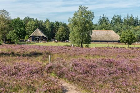 Dutch sheepfold with information centre near heathland of Dutch Veluwe National Park
