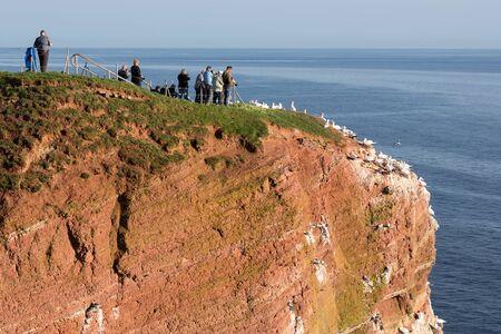Bird watchers near breeding Northern Gannets at red cliffs of Helgoland