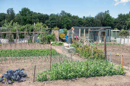 Dutch allotment garden with growing vegetables, bean stakes and shed Stockfoto