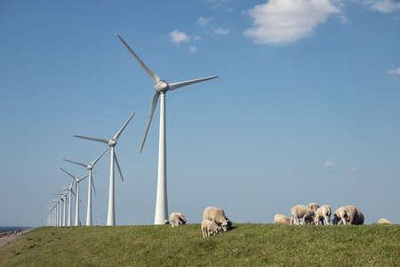 Dutch dike with wind turbines and sheep Stockfoto
