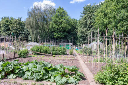 Dutch allotment garden with rhubarb plants and bean stakes near edge of the wood Stockfoto