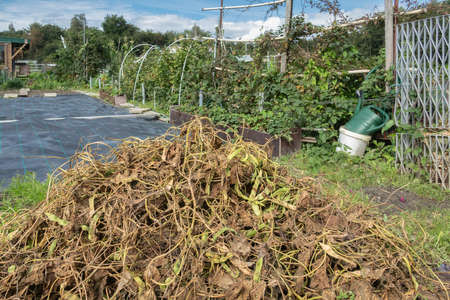 Dutch allotment garden in autumn with heap of garden waste from wilted leaves