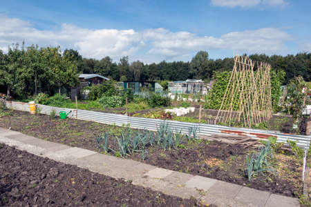 Dutch allotment garden in autumn with bean stakes and leek, a part of the garden is already harvested