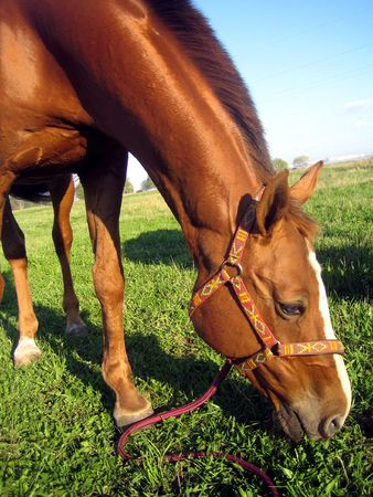 Red horse Stock Photo - 3028000