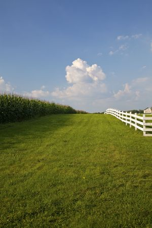 Cornfield with white fence separated by swath of green grass.  Bright blue sky with puffy white clouds.  Old barn in background.Rural New Jersey.  Vertical.