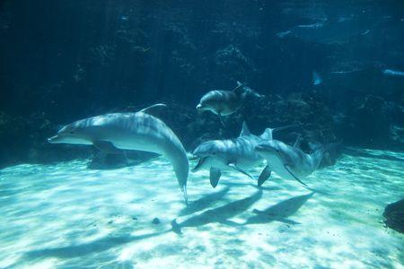 Groep van fles-neus dolfijnen zwemmen onderwater Stockfoto